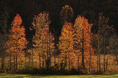 Autumn on Tater Branch