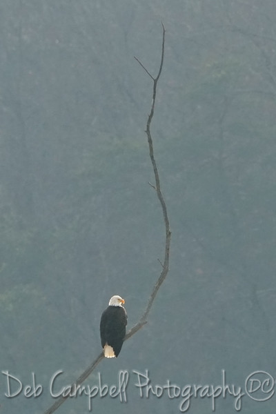 Freedom and Solitude