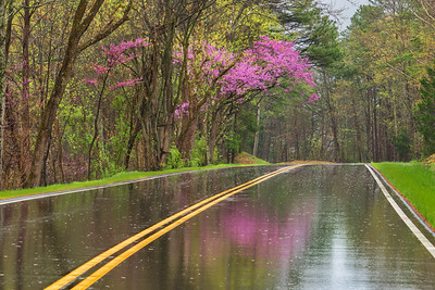 Springtime on Foothills Parkway-2