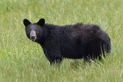 Hope-Momma Bear