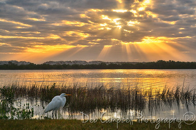 Sunrise with a Great Egret