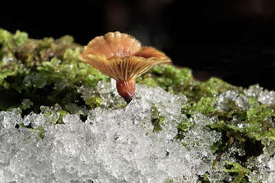 Mushroom in the Snow
