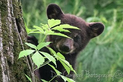Peek-a-Boo Bear Cub