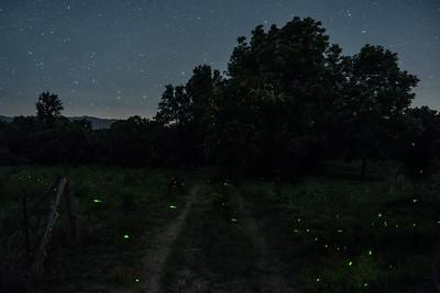Night Skies and Fireflies