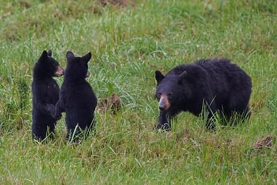 Hazel and cubs-Summer 2021
