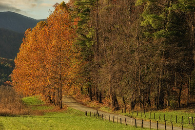 Autumn on Hyatt