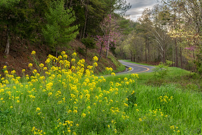 Springtime on Foothills Parkway-3