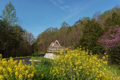 Foothills Parkway, Springtime