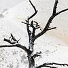 Tree & Path_9298