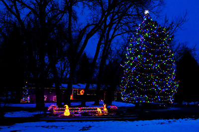 Christmas Tree Hullet WY_9537