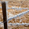 Fence Post & Barbwire Fog Ice Palouse WA_9138