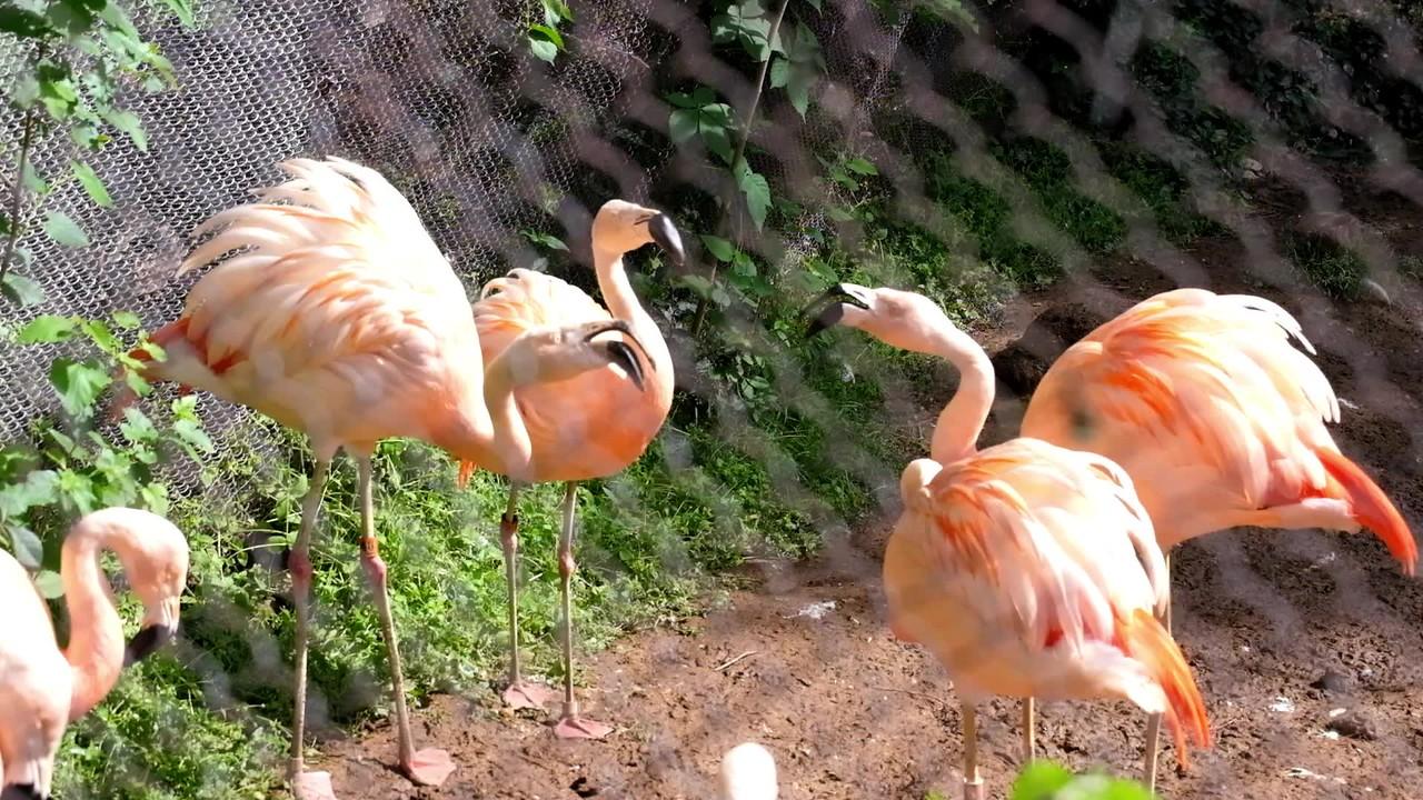 flamingos-3495