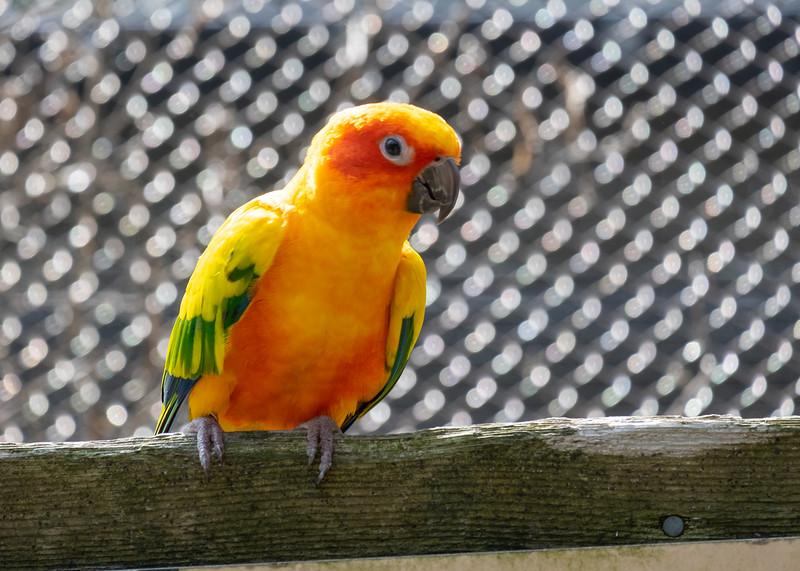parrot-3497