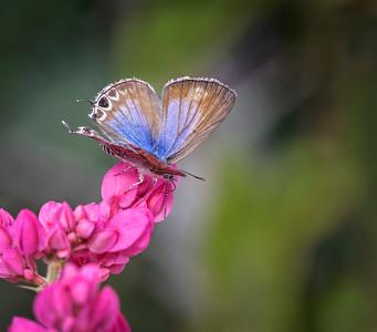Butterfly - 1380