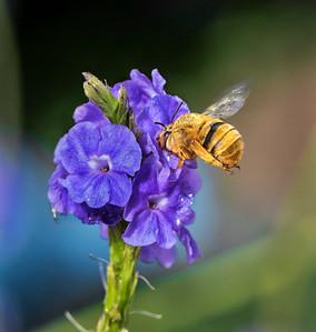 Teddybear bee - 1083