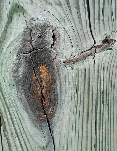 Wood cut - 5
