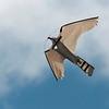 Kite Hawk