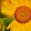 Pure Sunshine #3