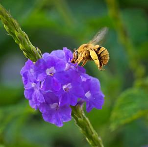 Teddybear bee - 1100