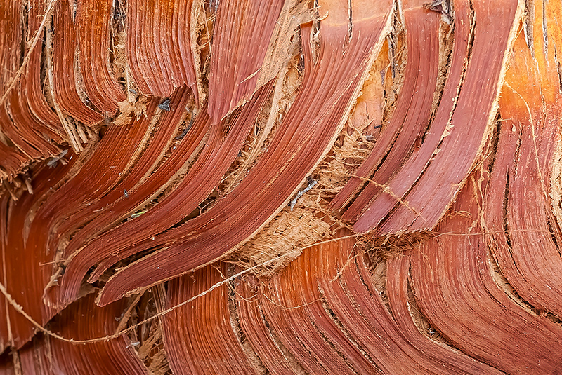 Wood cut abstract - 18