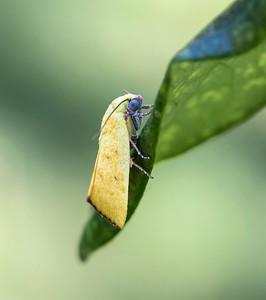 Moth - 9056