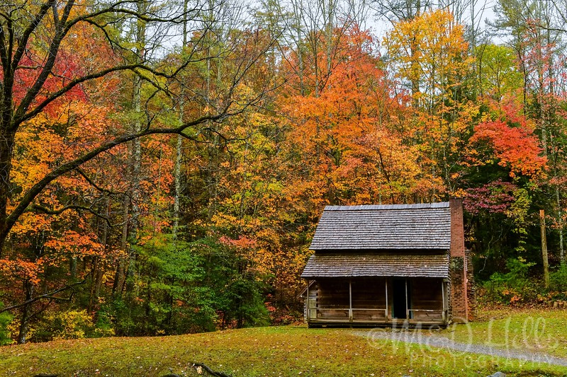 Fall At The Whitehead Cabin