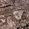 Tree abstarct
