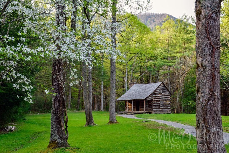 Spring Morning At The Shields Cabin