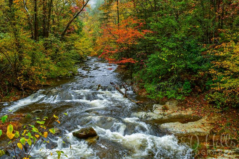 Fall At Laurel Creek
