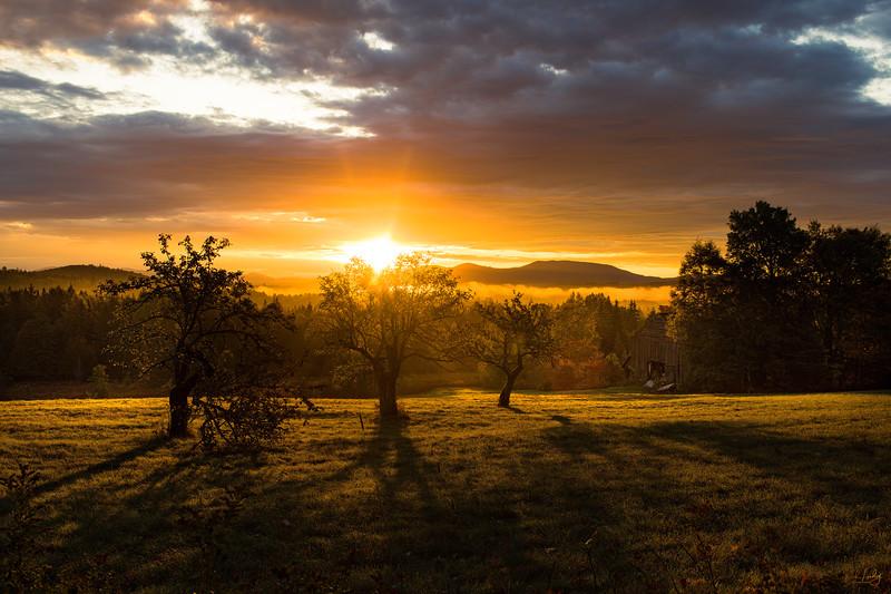 field_sunrise_6551w