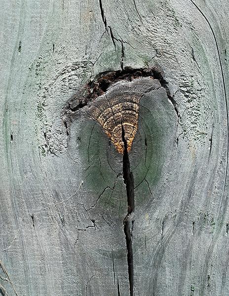 Wood cut - 8
