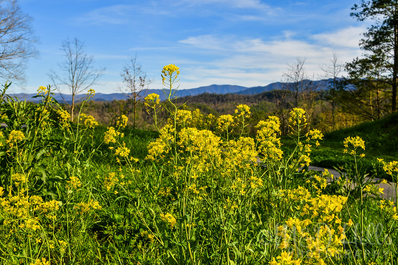 Sunny Spring On The Foothills