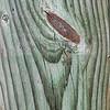 Wood cut - 11