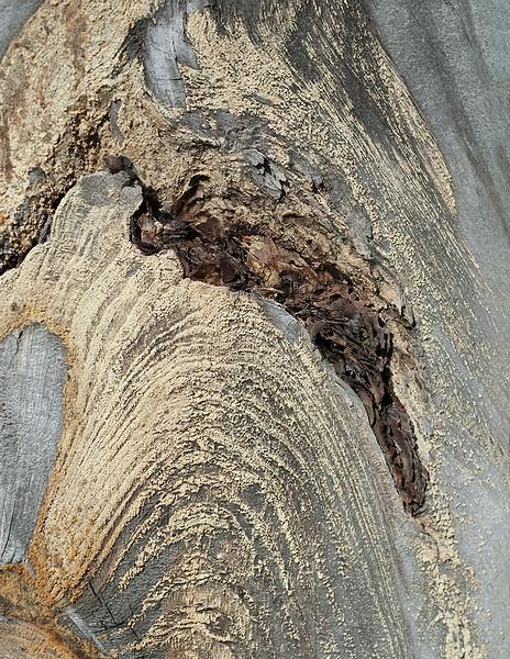 Wood cut - 2
