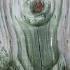 Wood cut - 10