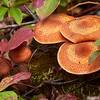 North Shore Mushrooms