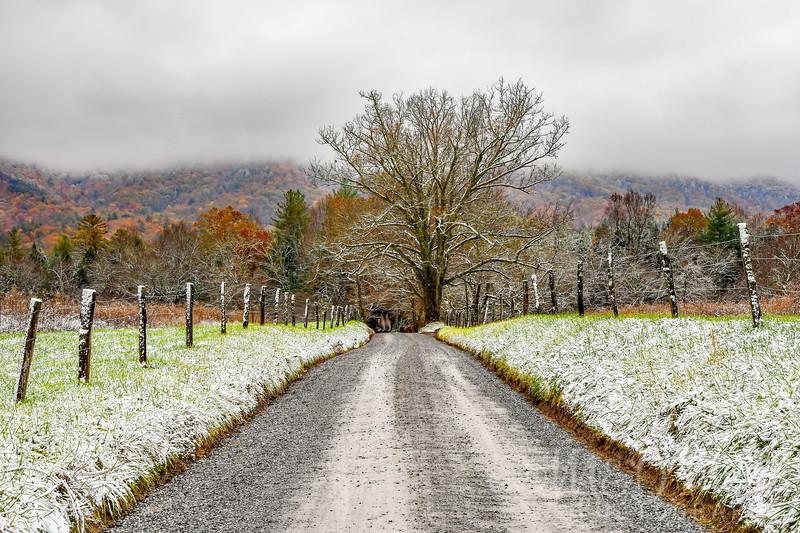 Sparks Lane Autumn Snow