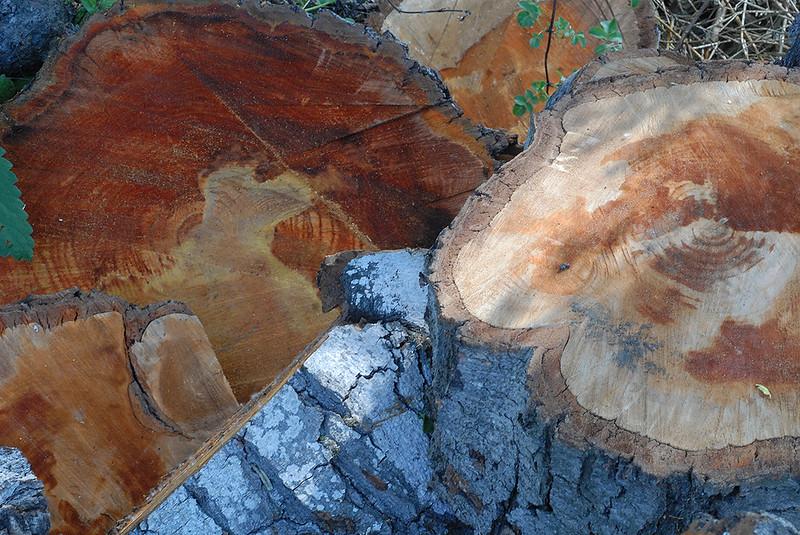 Wood cut abstract - 1