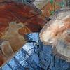 Wood cut - 1