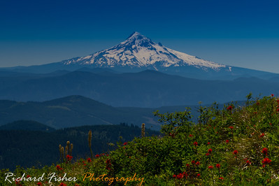 Mt Hood from Silver Star trail. SW Washington.