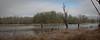 Hwy lake trees
