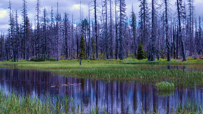 Some years after a forest fire. Near Black Butte Ranch, Oregon