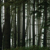 Can't see the forest through the trees, not because of the fog.  <br /> Behind this narrow strip of trees many acres of land had been clear-cut. <br /> Along 26 to the Oregon coast.