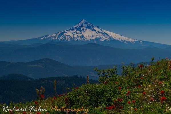 Mt Hood from Silver Star trail. SW Washington.