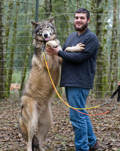 Zach's senior photo shoot was at the Zoological Wildlife Conservation Center in Rainier OR. Where he has worked after school for several years now. He actual help bottle feed this big boy. Now that the wolf is out with the pack he is very cautious when around men. The handler brought him out into this neutral play yard territory where It took about 20 minutes for the him to jump up and give Zach a big kiss. This is the shoot right after when they both turned and faced me. We got a lot of great shoots with a lot of different animals, I think Zach will be happy with his senior photos.