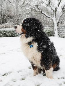 freddie 2014 snow 2
