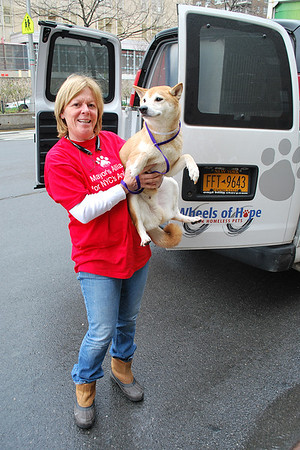 2011-04-19 - Transport of Thunderbolt and Jenny by Debbie Fierro - Krista Menzel