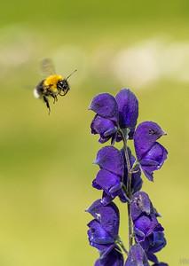 Heute erklären wir das mit den Blumen und den Insekten