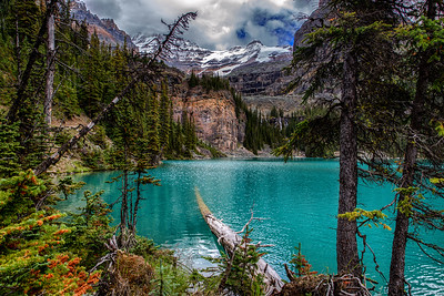 The Fallen Tree - Lake O'Hara