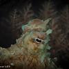 Octopus - Palau by Tracey Jennings